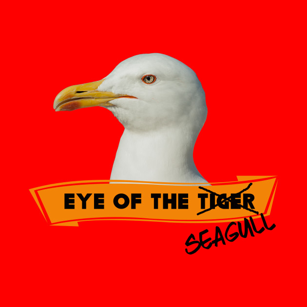 Eye of the Seagull