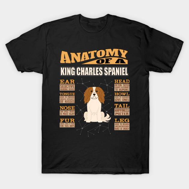 Anatomy Of A King Charles Spaniel - King Charles Spaniel English Toy Spaniel,Toy Spaniel,Charlies,Prince Charles Spaniel,Ruby Spaniel,Blenheim Spaniel,