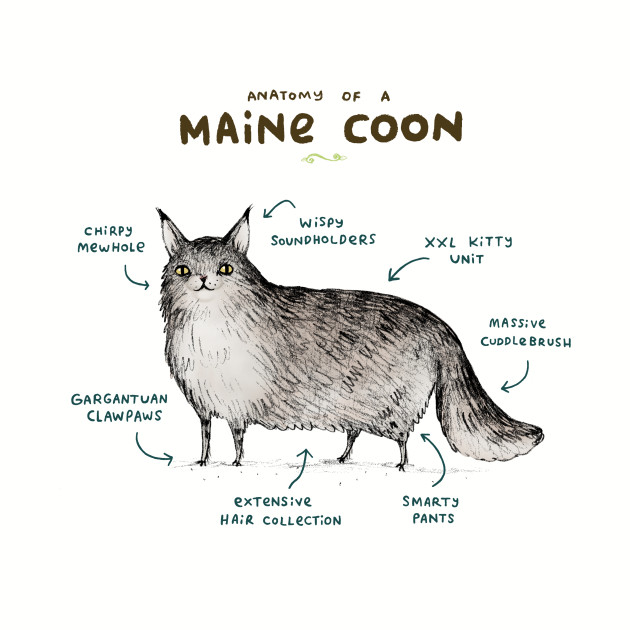 Anatomy of a Maine Coon