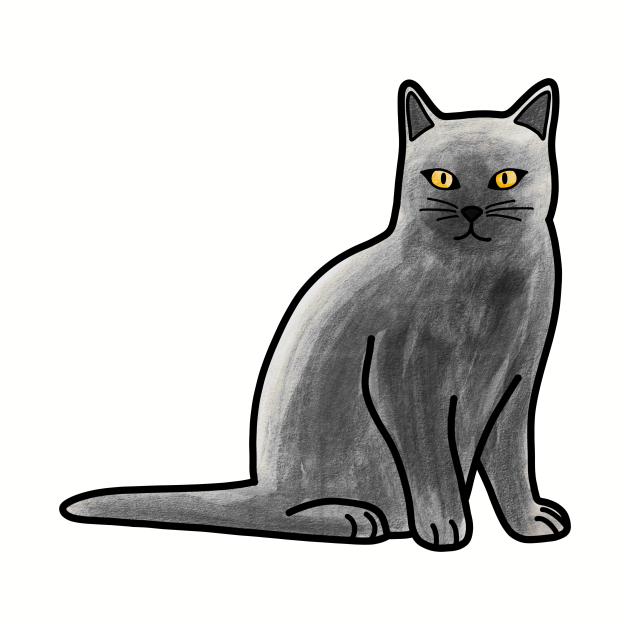 Gray British Shorthair Cat