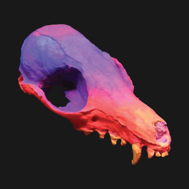 Sunset Fox Skull