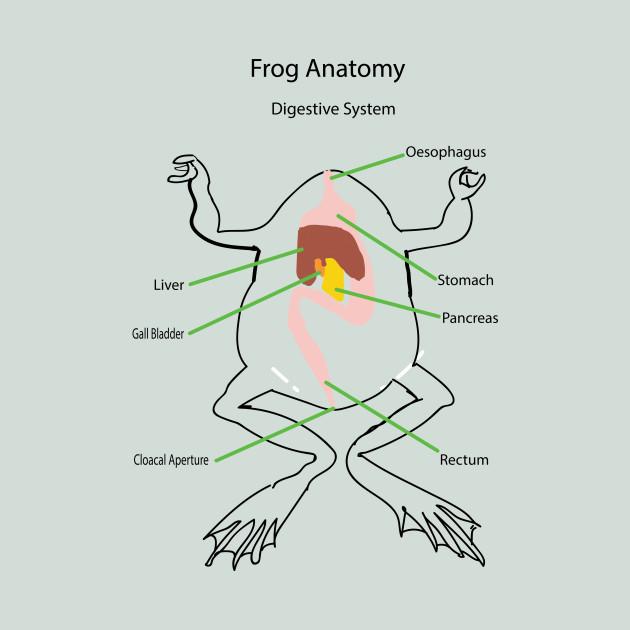 Frog Anatomy Digestive System Stomach Mouth T Shirt Teepublic