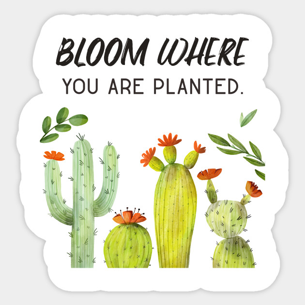 cactus flower art motivational quotes cactus autocollant