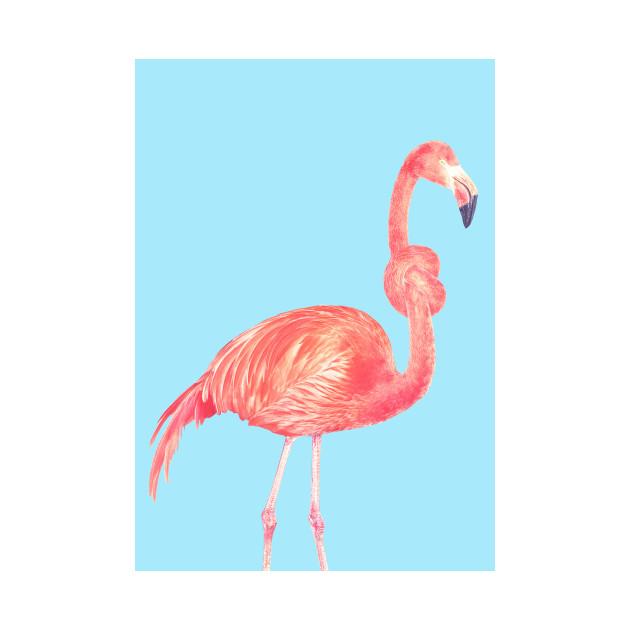 Flamingo with a big problem