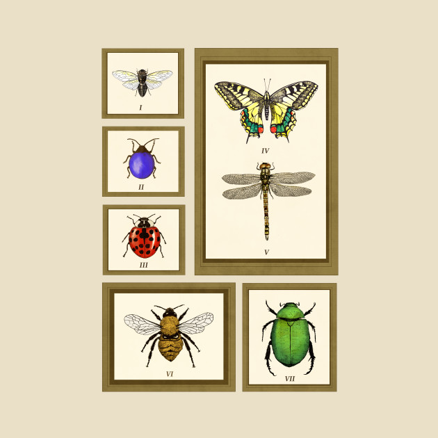 Framed Bugs - Insects - T-Shirt | TeePublic