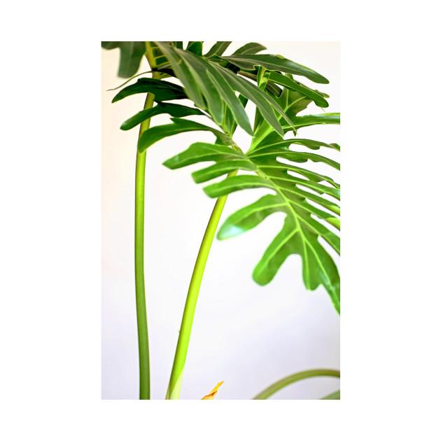 Soft Green Foliage on White Background