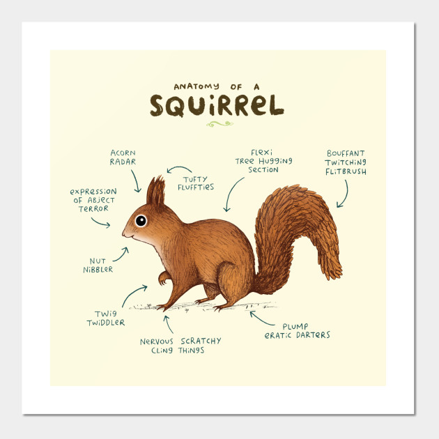 Anatomy Of A Squirrel Anatomy Posters And Art Prints Teepublic