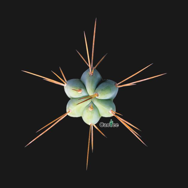 Trichocereus Hybrid SS01 x SS02 Tip