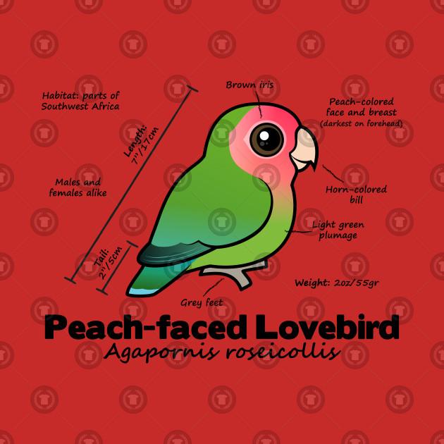Peach Faced Lovebird Weight