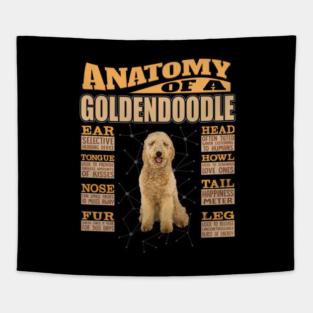 Anatomy Of A Goldendoodle Goldendoodle Dog