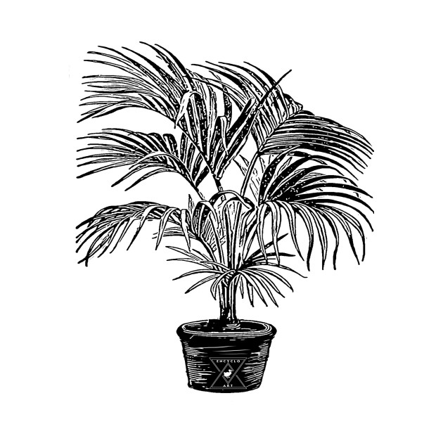 Houseplant Palm Plant Botanical Leaves