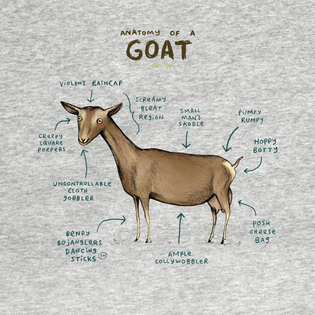 Anatomy of a Goat