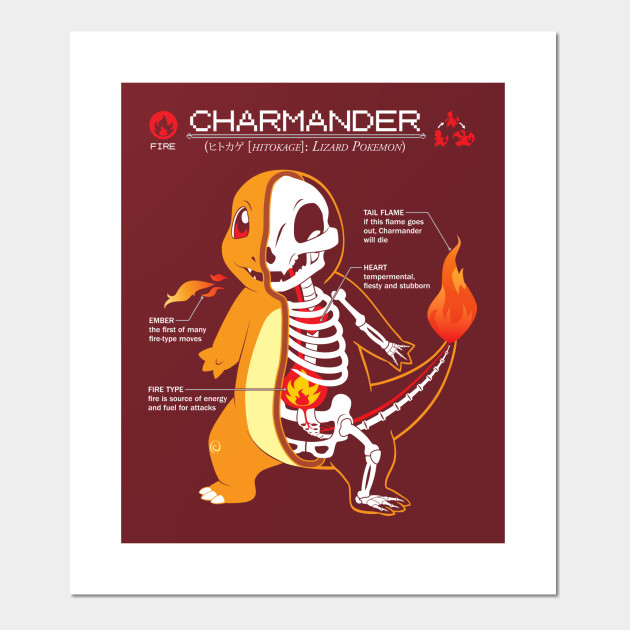 Charmander Anatomy Pokemon Posters And Art Prints Teepublic