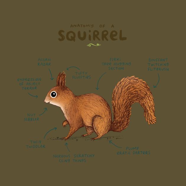 Anatomy of a Squirrel - Anatomy - T-Shirt | TeePublic