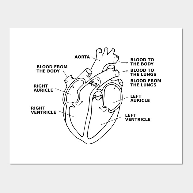 Limited edition exclusive heart diagram annotated heart diagram 1423574 1 ccuart Image collections