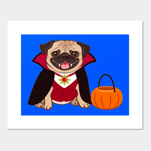 Halloween pug dog in vampire costume cartoon illustration. Cute friendly fat chubby fawn sitting pug puppy, smiling with tongue out. Pets, dog lovers