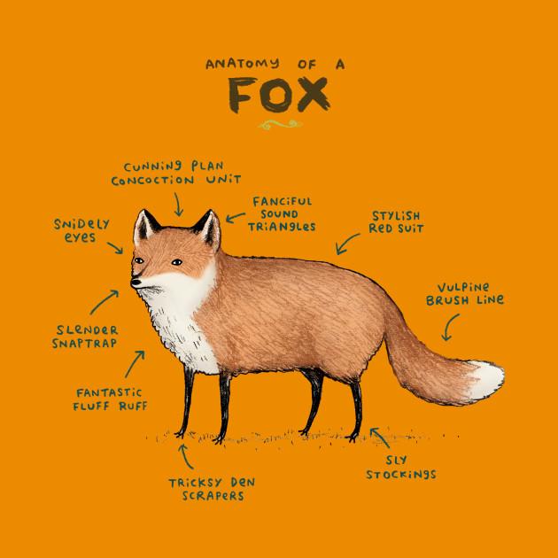 Anatomy of a Fox - Lol - Kids T-Shirt | TeePublic