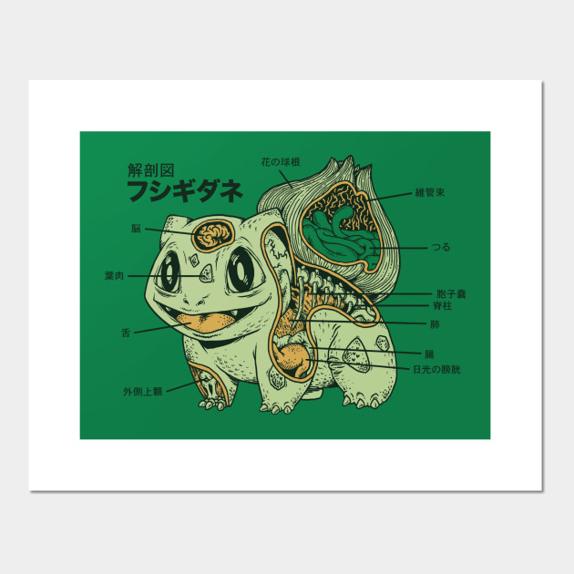 Bulbasaur Anatomy Pokemon Posters And Art Prints Teepublic