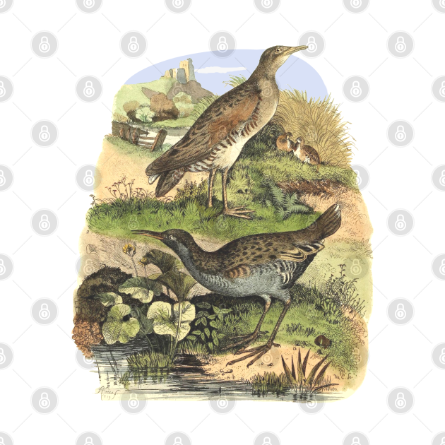 Birds on the landscape background