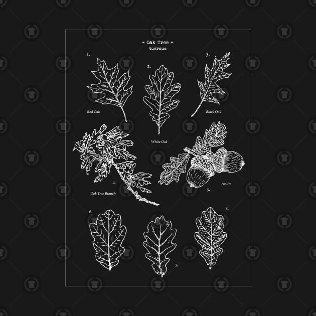 Oak Tree Elements