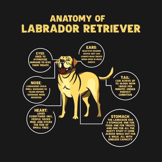Anatomy Labrador Dog Owner Shirt Dog Onesie Teepublic