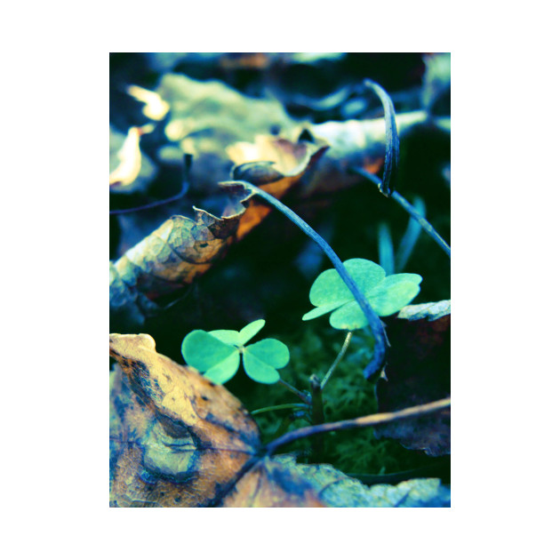 Dead Leaves and Clovers
