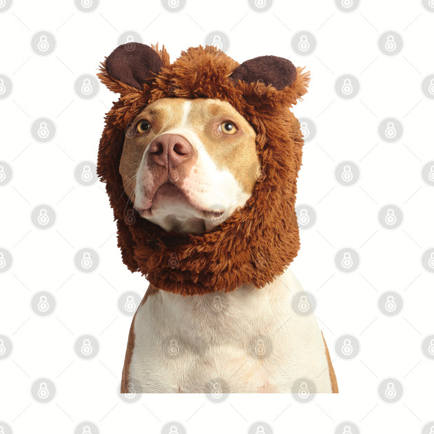 Photograph of cute brown and white american pit bull terrier wearing brown costume