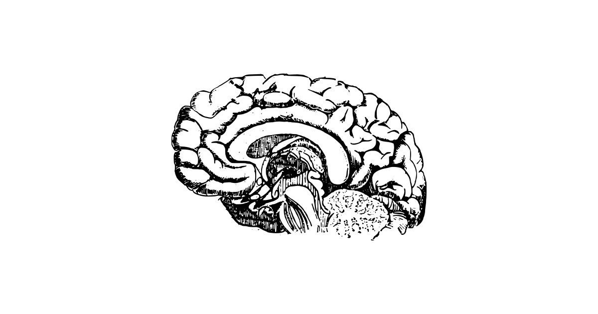 LIMITED EDITION  Exclusive Simple Brain Diagram by muggpropetexdesign