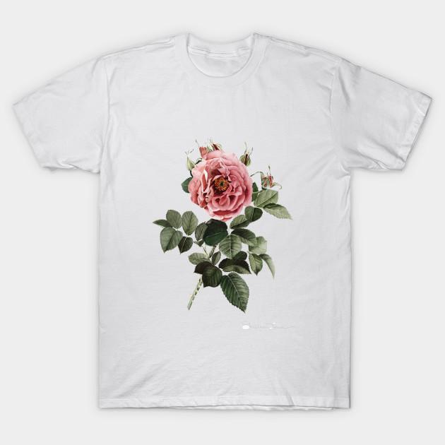 091156c9 Red English Rose - Roses - T-Shirt | TeePublic