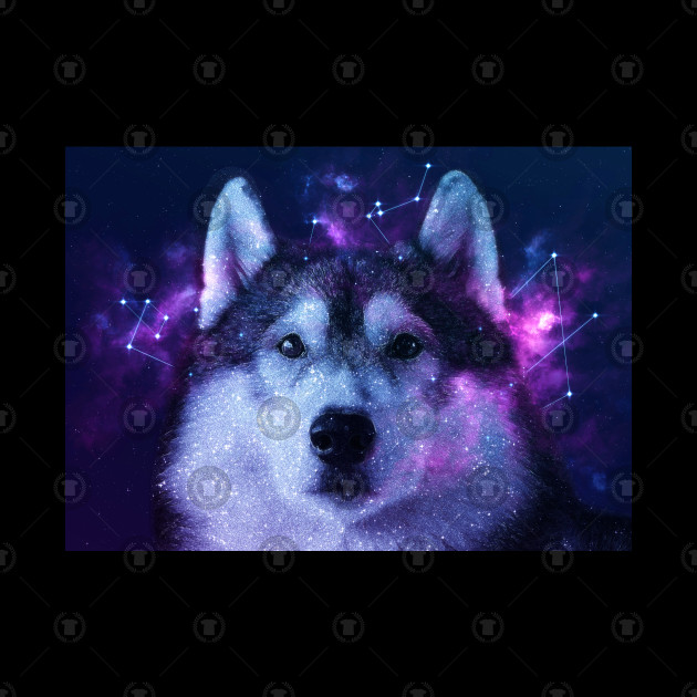 Galaxy Siberian Husky