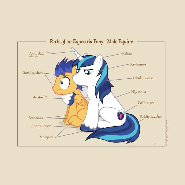 Pony Anatomy - Male Equine - My Little Pony - T-Shirt   TeePublic