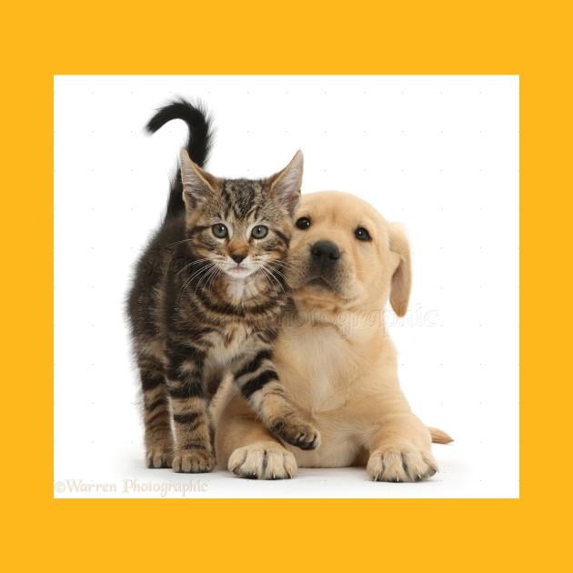 Puppies Kitties Cute Baby Animals T Shirt Teepublic