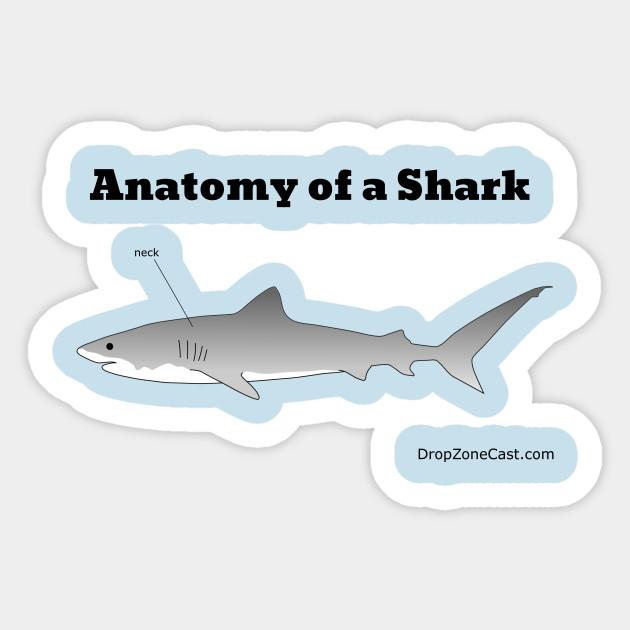 Anatomy of a Shark - Anatomy Of A Shark - Sticker | TeePublic
