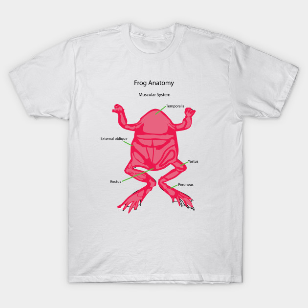 Frog Anatomy Muscular System Muscles T Shirt Teepublic