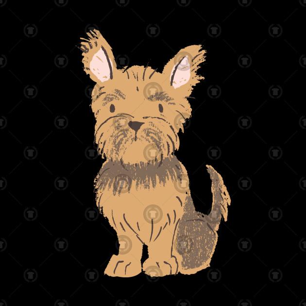 Teacup Yorkshire Terrier Puppies Perth Find Best 4k
