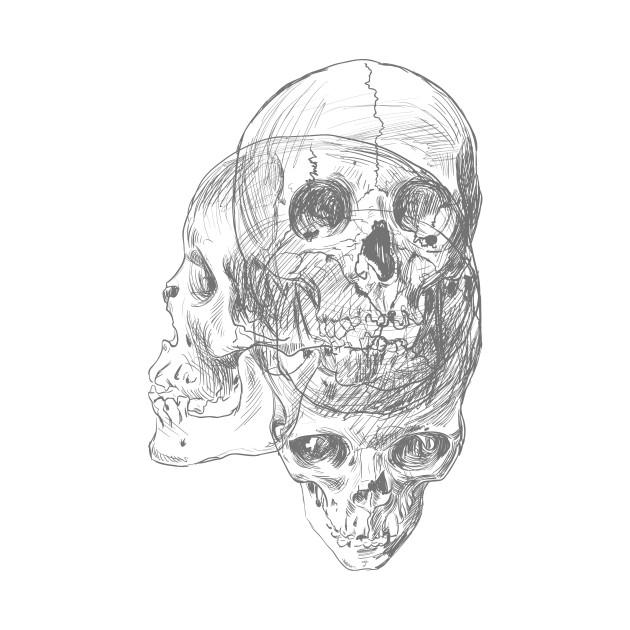 Anatomy Skulls