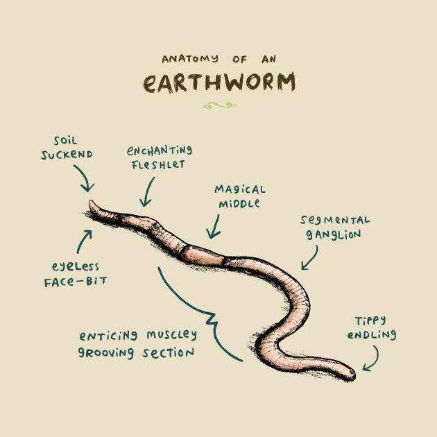 Anatomy Of An Earthworm Vintage T Shirt Teepublic