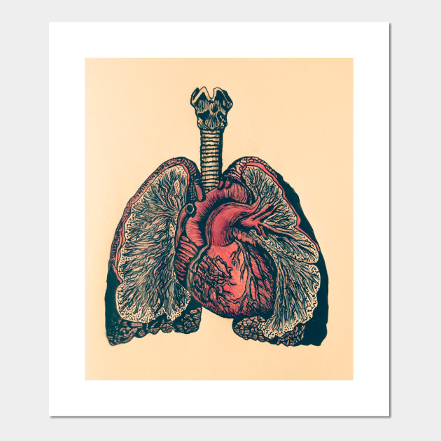 Heart Lungs Anatomy Posters And Art Prints Teepublic