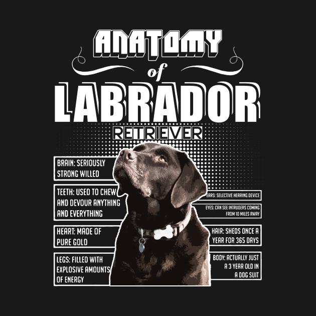 Anatomy Of Labrador Retriever Labrador Retriever Kids T Shirt