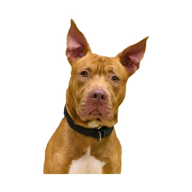 Adorable Brown Dog