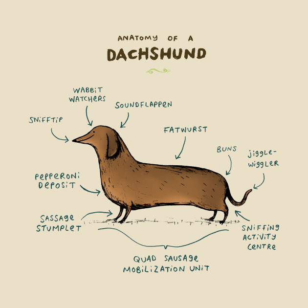 Anatomy of a Dachshund