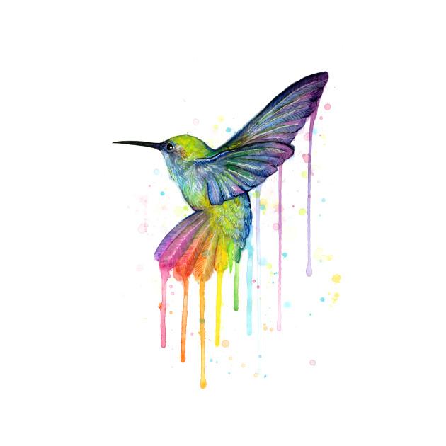 Rainbow Hummingbird Animal T Shirt Teepublic
