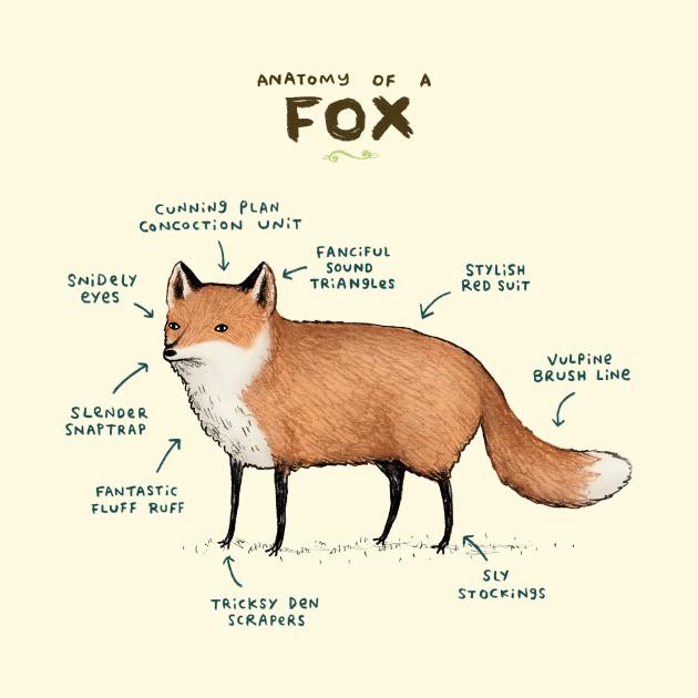 Anatomy of a Fox