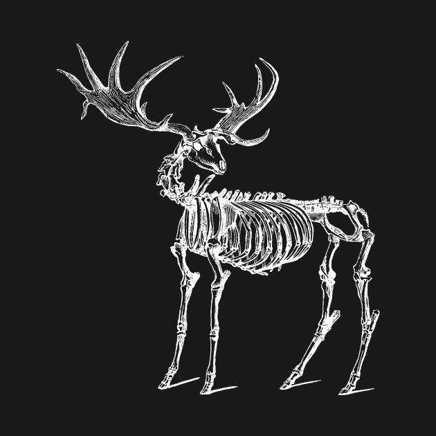 Megaloceros, Ancient Irish Deer