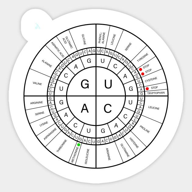 Mrna Codon Wheel Genetics Codons Mrna Dna Translation Amino Acids
