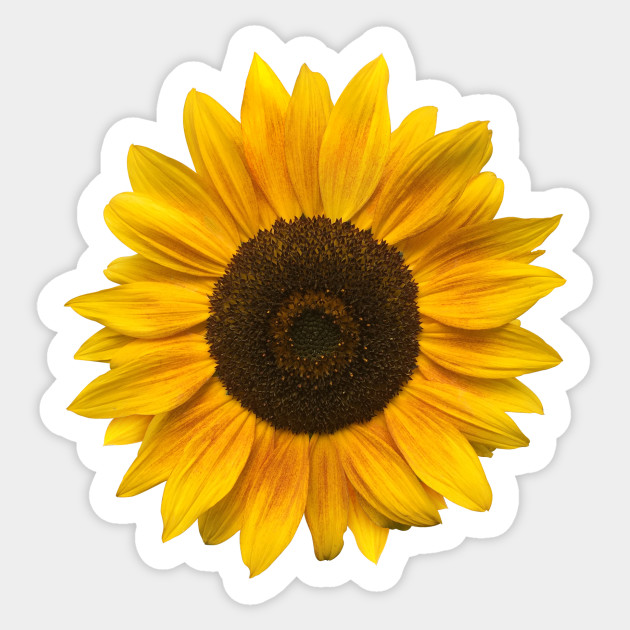 93d5453c7 Sunflower (Flower / Blossom / Sun) - Sunflower - Sticker | TeePublic