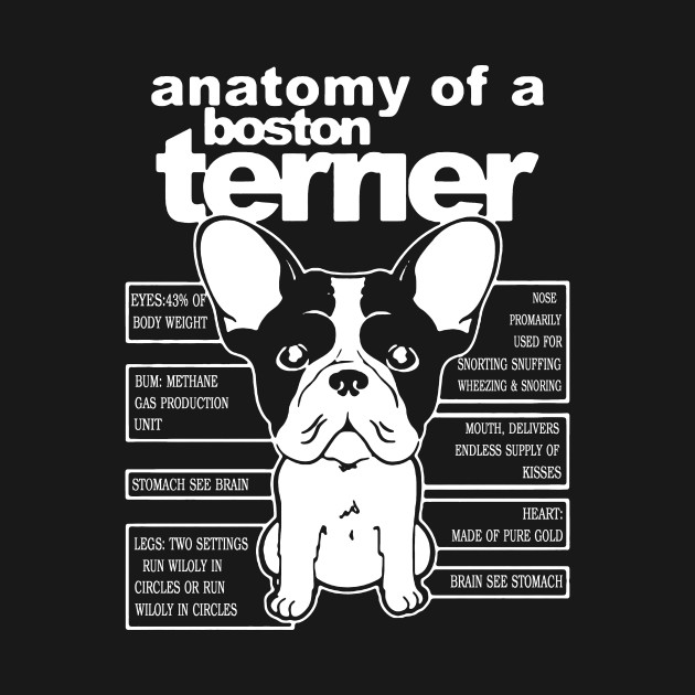 Anatomy Of A Boston Terrier Shirt - Anatomy Of A Boston Terrier - T ...