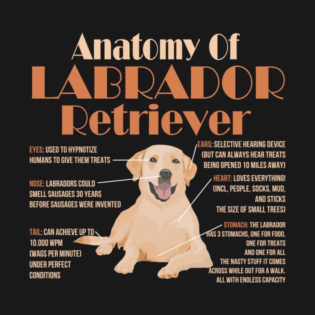 80f15c27 Cute and Funny Anatomy of a Labrador Retriever - Labrador - T-Shirt ...