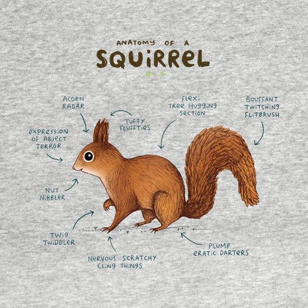 Anatomy of a Squirrel