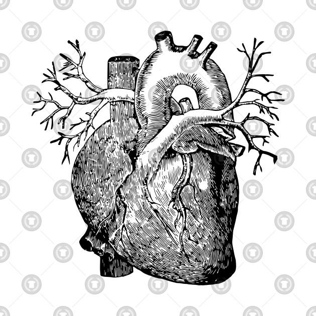 Anatomical heart 2.0 - Heart - T-Shirt | TeePublic